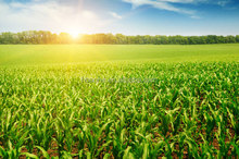 Potassium K chelate based on amino acids organic fertilizers