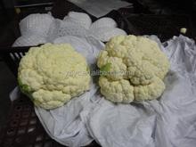 Chinese white cauliflower