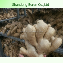 Air Dry Gingers From China New Crop Organic Ginger