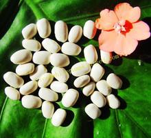 Supplying 2014 Crop Square Shape MWKB Beans