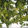 100% pure dried broccoli dehydrated broccoli