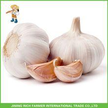 New Crop Of Fresh Garlic Manufacturers