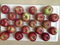 20kg carton red star apple