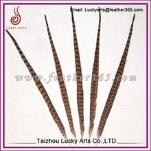 Taizhou lucky arts provide Natural Pheasant Tail Pheasant Feather