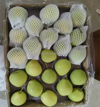 fresh Shandong Pear export to india in 15kg carton