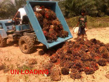 Multipurpose vehicle Tractor 18 HP tractor Palm oil plantation wet land