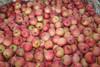Apple Fruit Packaging Boxes Red Fuji Apple Fruit