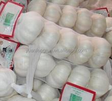 2014 Fresh Natural Garlic
