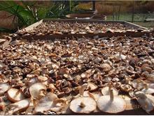 Water Soluable Organic Chaga Mushroom Extract