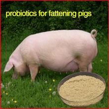 growing and fattening pigs , Replace antibiotic