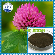 Best sale red clover extract/red clover/red clover tea