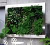 Hot sale plant art plant wall flower garden Green artificial Wall/ vivid dec wall