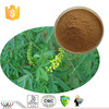 High quality natural Melilotus extract / Melilotus suavcolen extract / sweet clover extract with 5% Cumarin by HPLC