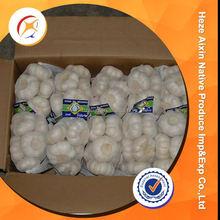 Fresh Garlic Farming For Wholesale