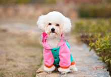 Two legs Small Dog Coats for Puppy Pet Clothes Winter Wholesale