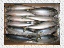 frozen mackerel price 400-600g