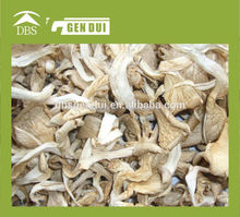 ideal microwave dried oyster mushroom machine Dried Oyster mushroom Yunnan Oyster mushroom
