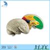 Kindergarten classroom kids teaching montessori material Cross Section Human Brain Model