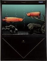 hot sale fivestar glass ornamental fish tank aquarium with LED lighting