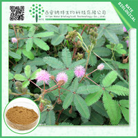 High Quality Cheap herbal Extract / hot product mimosa pudica powder 20:1