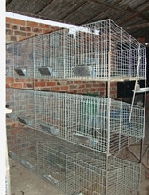 Direct Factory stainless steel rabbit cages,commercial rabbit farm cage,cage for rabbit HJ-RC24