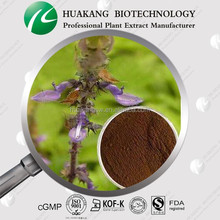 GMP&KOSHER Coleus Forskohlii Extract with Competitive Price