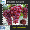 High Standard Low Price Organic Grape Seed Extract OPC 95%