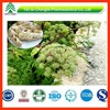 GMP ISO certificated factory supply high quality Competitive price Angelica sinensis P.E