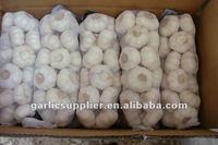 snow white garlic new crop