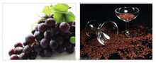 GMP factory supply Goods high quality Grape Seed Extract