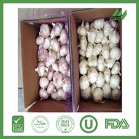 small packing fresh garlic