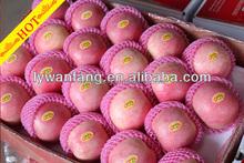 Delicious apple fruits containing potassium wholesale price