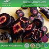 Black Radish Root Extract, Black Radish Root Extract Powder,Black Radish Root P.E.