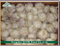 Chinese Nice Pure White Garlic Supplier