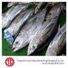 EU approved yellowfin tuna price