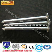 common Wire Nails(professional factory)