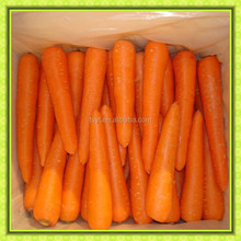 fresh carrot import and export