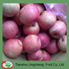 New Crop Fresh Qinguan Apples Price