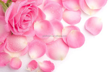 Rose aroma oil used in glass cleaner, bleach, air-conditioner cleaner, floor cleaner