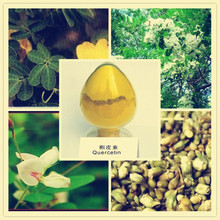 High qualiy, top grade reasonable price quercetin extract is at rushing sale