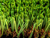 2014 hotsell economy artificial turf for backyard