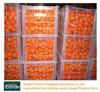 Top Quality Nanfeng Mandarin Orange Citrus Fruit for Sale