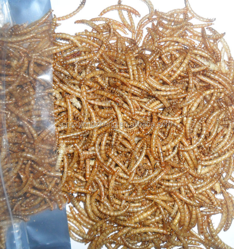 Commonly used for fish dried mealworms eco friendly for Mealworms for fishing