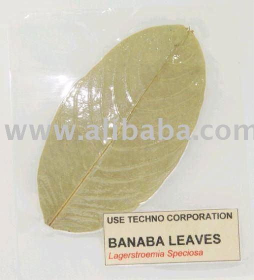 Banaba feuille [ pour l'utilisation de thé, Extrait ]