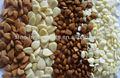 Almendra de albaricoque orgánica
