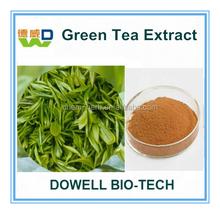 Factory Supply Organic 20%-95% Polyphenols Green Tea Extract/Green Tea Extract Powder