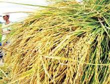 RICE IMPORTERS IN UAE CHEAPEST PRICE