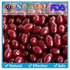 bulk buy from china Coenzyme Q10 Softgel