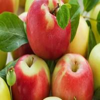 apple juice concentrate manufacturer