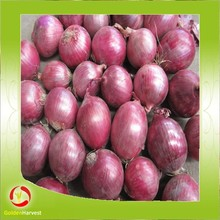 2015 Fresh Red Onions With Low Price In China